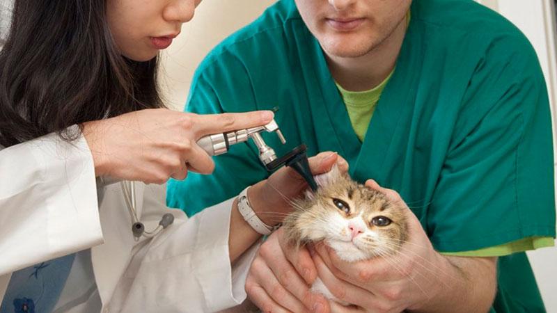 ATV sujetando un gatito en la clinica veterinaria