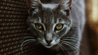 Primer plano de los bigotes de un gato
