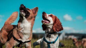 Dos perros de diferentes razas