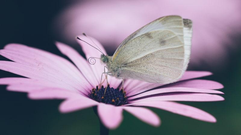 Mariposa sobre una flor: