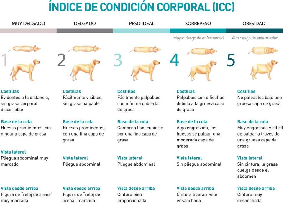 Índice corporal en perros