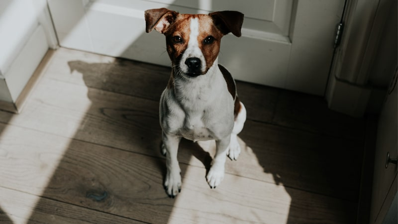 Perro sentado esperando a su dueño
