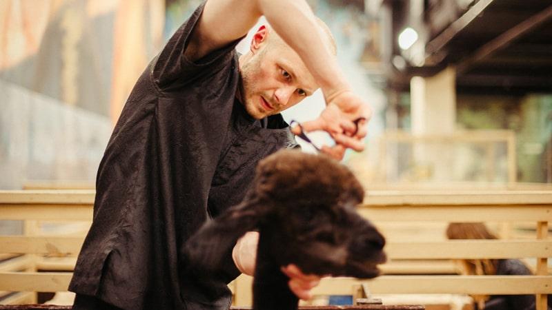 Corte de pelo de un perro