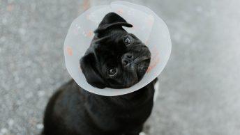 Perro con collar campana