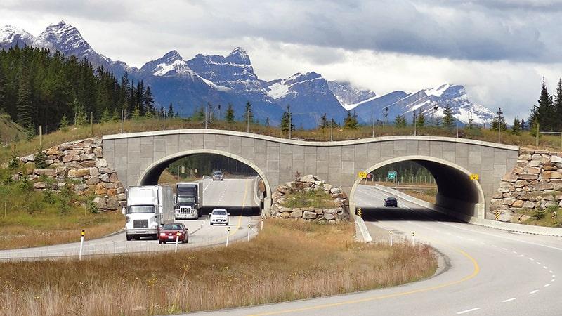 Paso de fauna en una carretera de Canadá