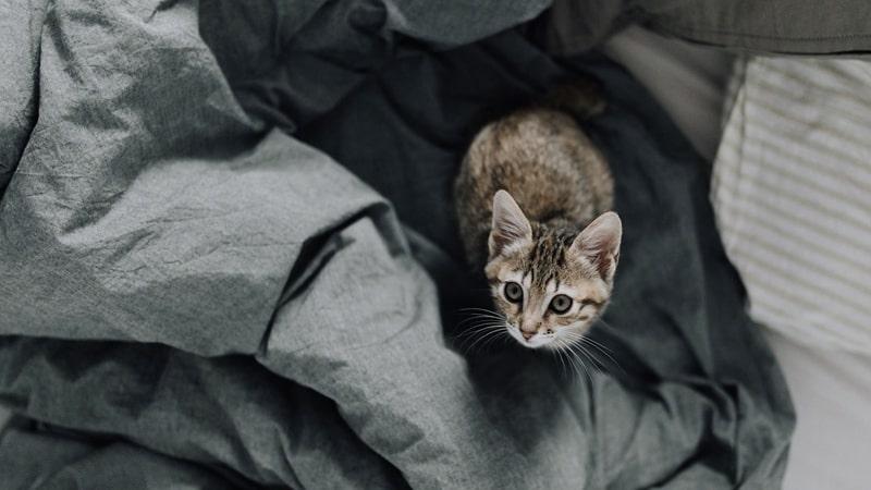Gato sobre un colchón