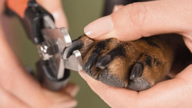 Corte de uñas en un perro