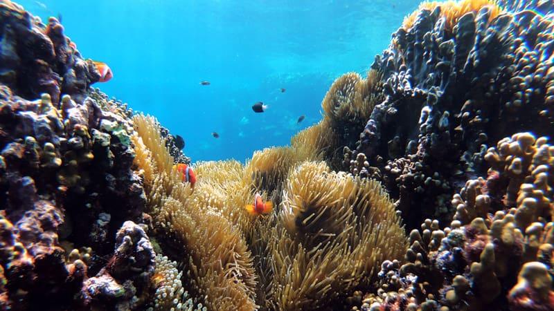 Plantas de coral