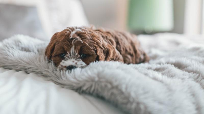 Perro con frío tumbado en una manta