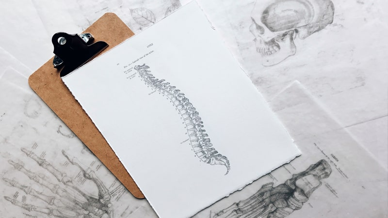 Ilustración de la columna vertebral