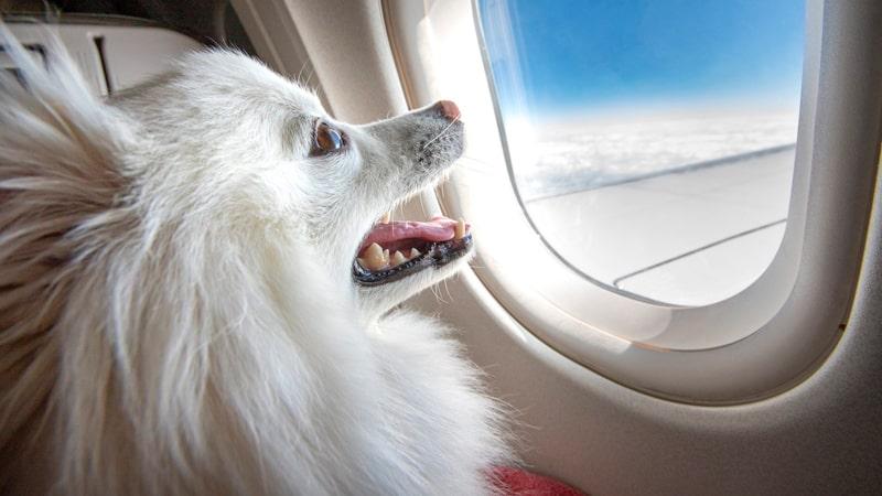 Perro en la ventanilla de un avión