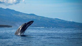 Avistamiento de ballena cerca de la costa