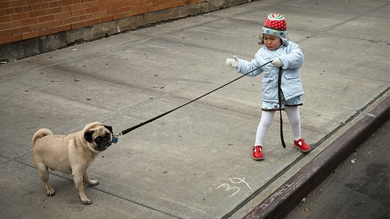 Niña reprende a su perro