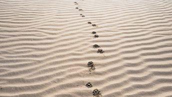 Huellas de perro sobre la arena