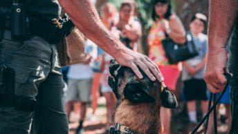 Perro K9 acariciado por su guía canino