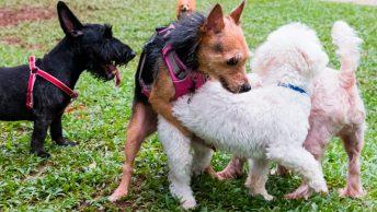 Perro montando a otros perros
