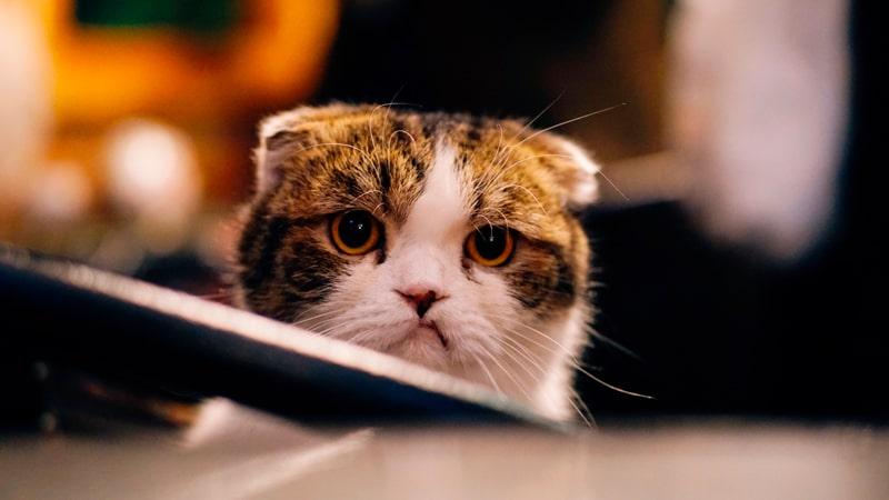 Gatito mira muy triste
