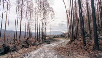 Bosque deforestado