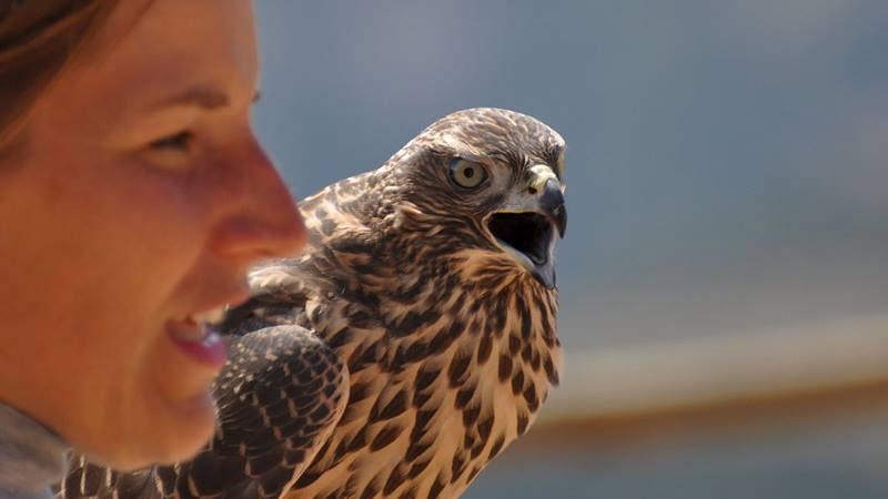 Imagen del Zoo del Pirineu