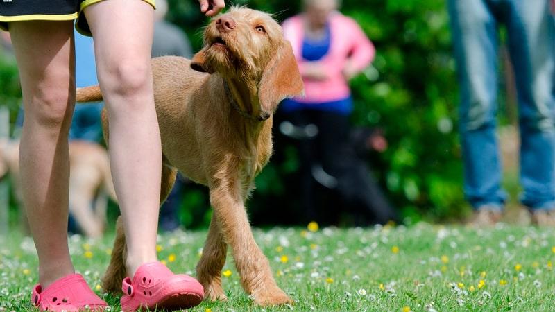 Adiestramiento a un perro sordo
