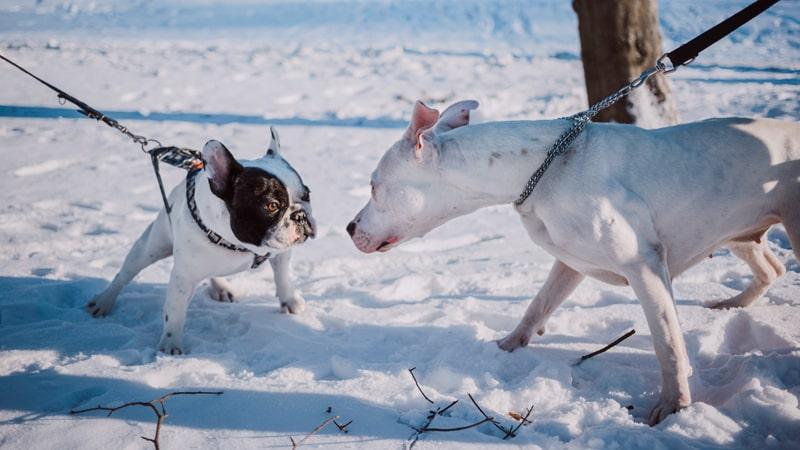 Dos perros con collar y arnés