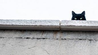 Gato mira desde arriba