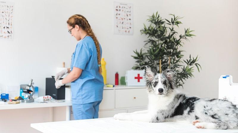 Consejos para la entrevista para auxiliar de veterinaria 1