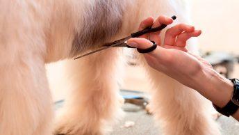 Peluquero cortando el pelo a un perro