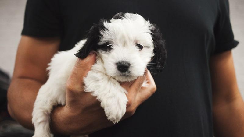 hombre-perro-brazo-min