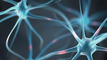neuronas-sistema-nervioso-min