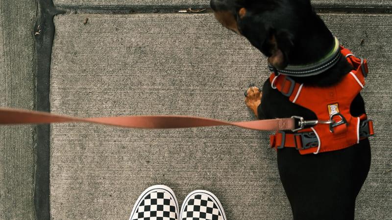 Perro paseando al lado de sus dueña