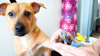 perro-en-peluqueria