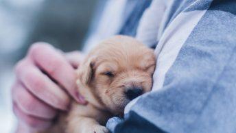 veterinario-perrito-min