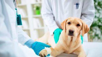 veterinarios-triaje-perro-min