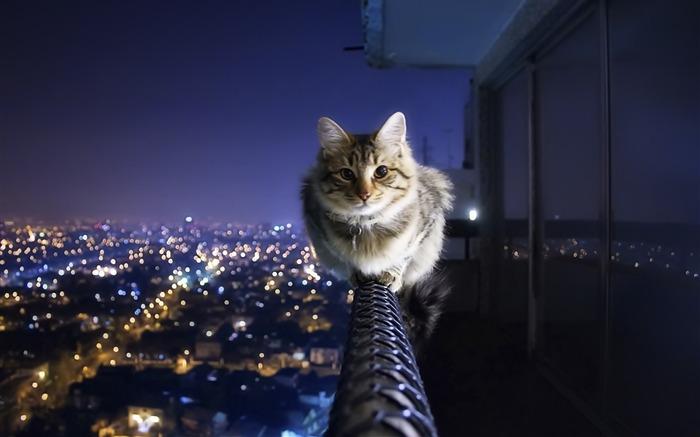 |boca_gato_|cat-playing||grey_cats_playing-1920x1200