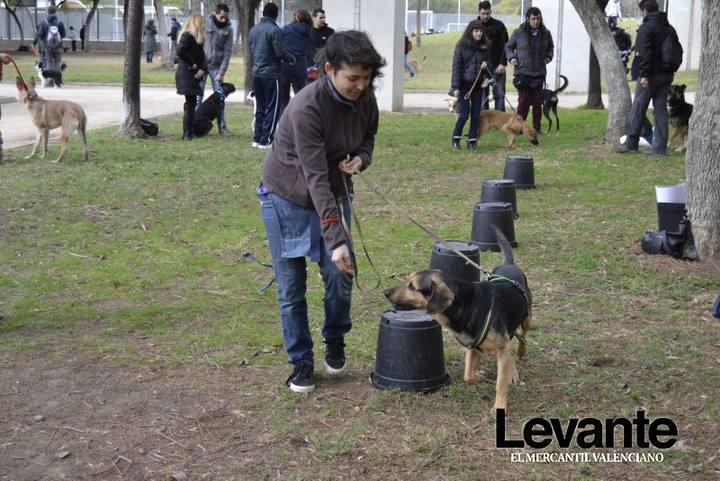 Adiestramento de Perros en los Jardines del Turia.