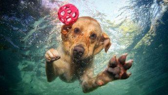 perro sumergido|Cuidados-perros-agua-5|Cuidados-perros-agua|Cuidados-perros-agua-2|Cuidados-perros-agua-3