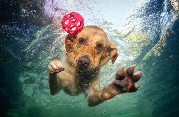 perro sumergido Cuidados-perros-agua-5 Cuidados-perros-agua Cuidados-perros-agua-2 Cuidados-perros-agua-3