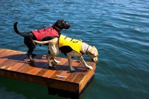Cuidados-perros-agua-5
