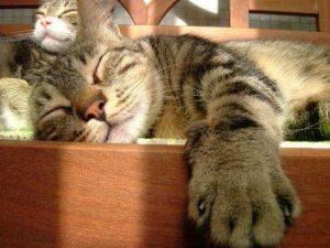 Gatos-durmiendo