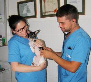 Practicas de Auxiliar de Veterinaria