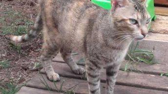 Princesa-gata-adopcion-asociacion-APAO-barcelona-1|Princesa-gata-adopcion-asociacion-APAO-barcelona-0|Princesa-gata-adopcion-asociacion-APAO-barcelona-2