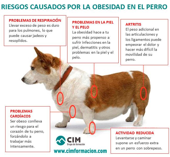 Riesgos de obesidad en perros