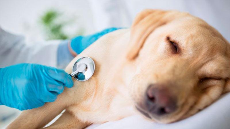 adevertencias-veterinario