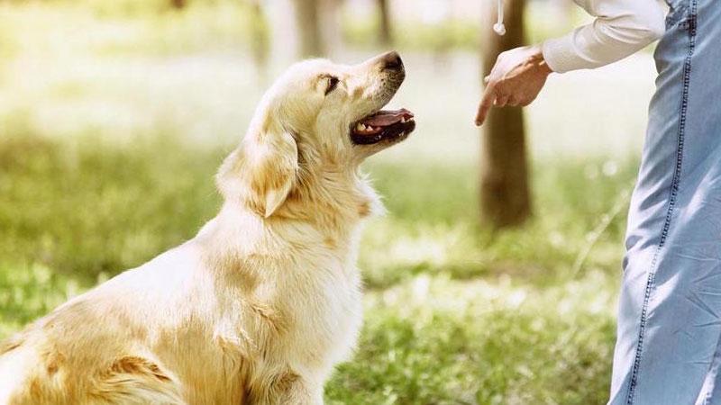 Adiestrar en positivo al perro para obedecer órdenes