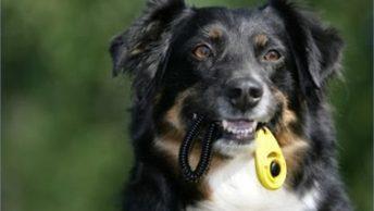 adiestrar perros con clicker|clicker