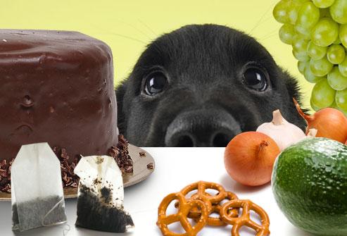 alimetos-toxicos-perro-CIMFormacion|perro-comiendo-basuras-CIMFormacion