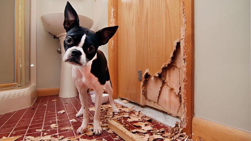 ansiedad-en-perros ansiedad-por-separacion-en-perros
