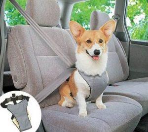 arnes-seguridad-perro-coche