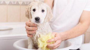 Perro cachorro siendo bañado